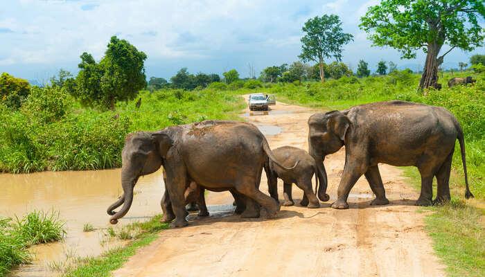 Watch Elephants