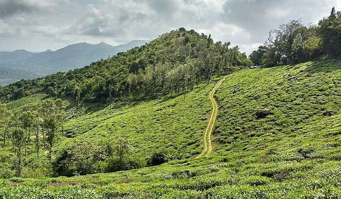 popular hill stations near Guruvayur