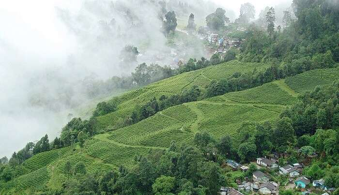 quite pleasant of Darjeeling