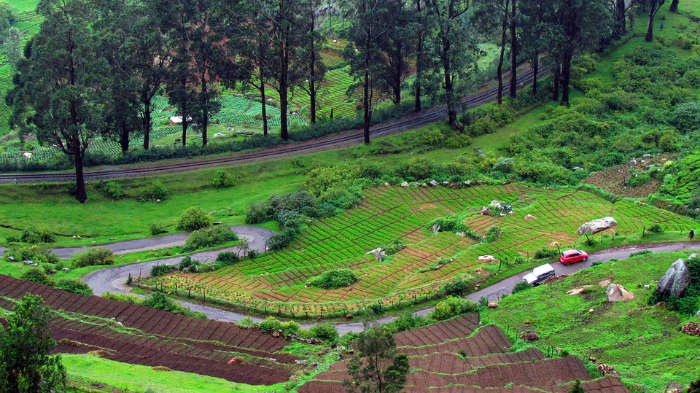 Green View of Ooty