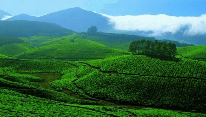 Best hill stations near wayanad