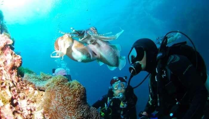 scuba diving in Surin Islands