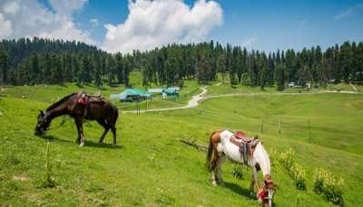 Horse geazing mountain side