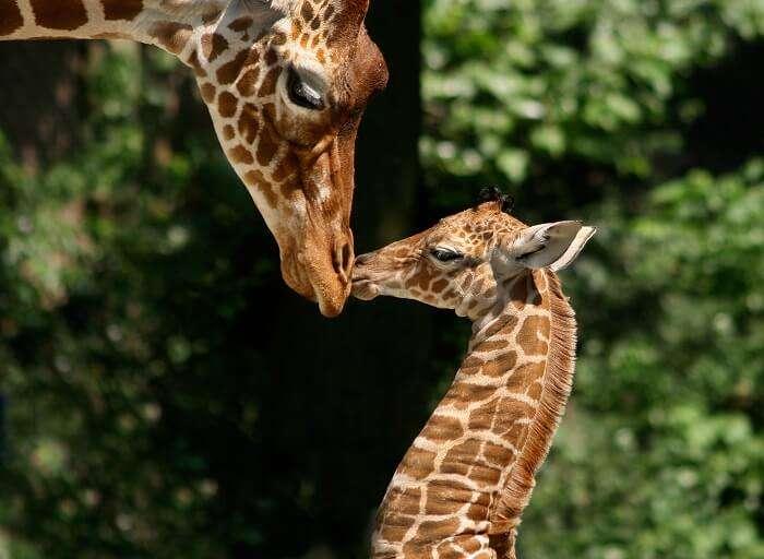 Zoos in Netherlands