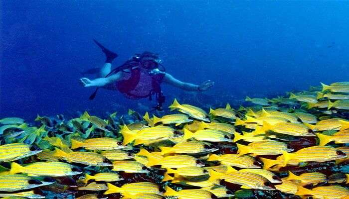 see the banana reefs in maldives island