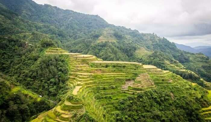 green terraces are a farming wonder