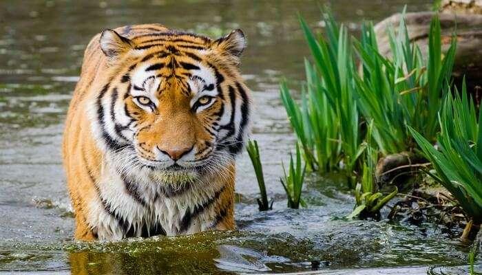 a tiger reserve