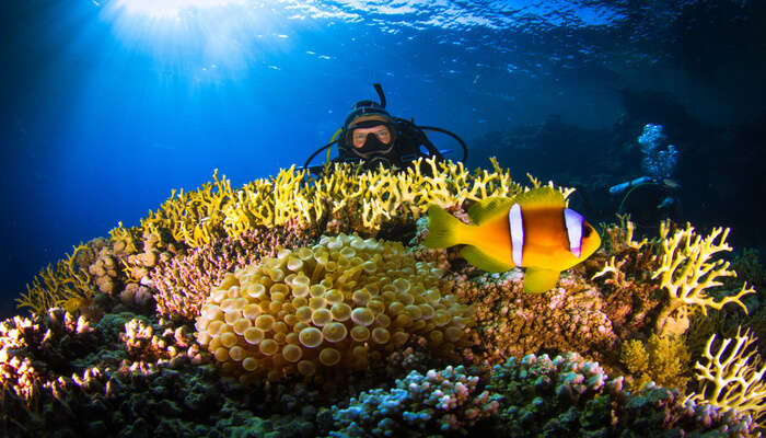 Cover image of scuba diving in the red sea