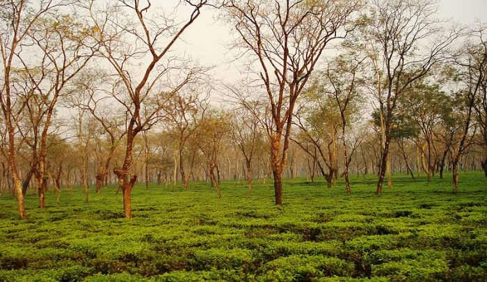 Dooars in West Bengal