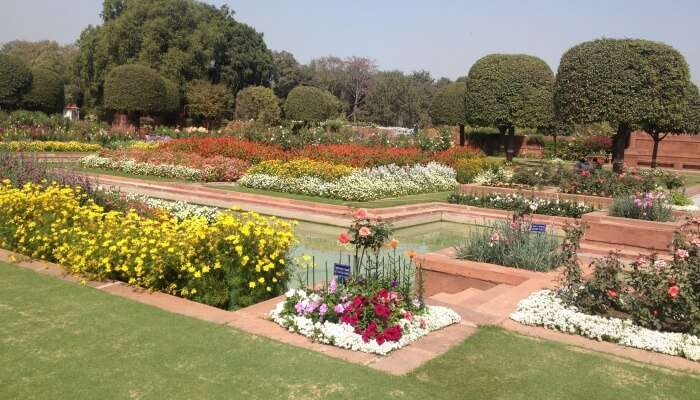 flower carpets in different hues displayed