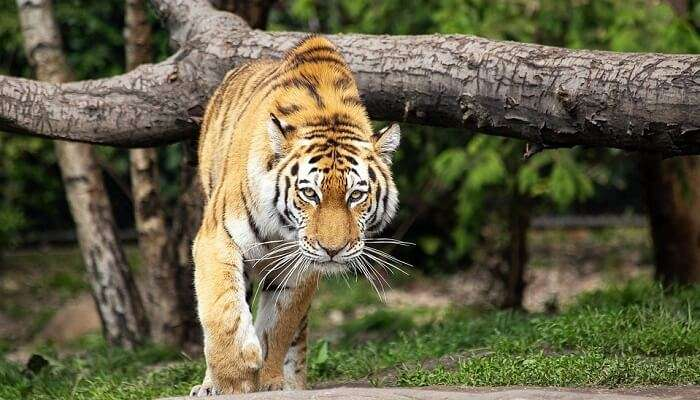 Gundla Brahmeswaram Wildlife Sanctuary
