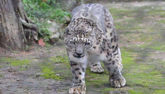 Himalayan Zoological Park in Gangtok