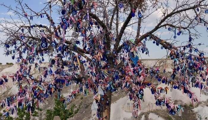 evil tree in cappadocia