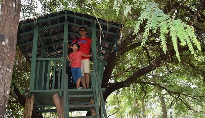 fun at tree house