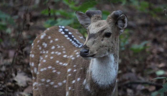 spot plenty of deers in jungle