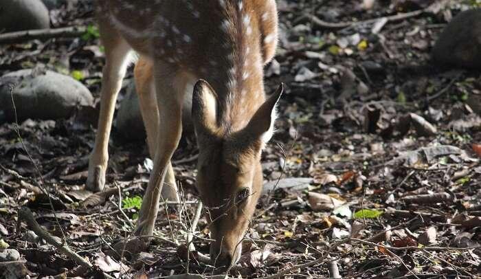 spot the deer in jungle safari