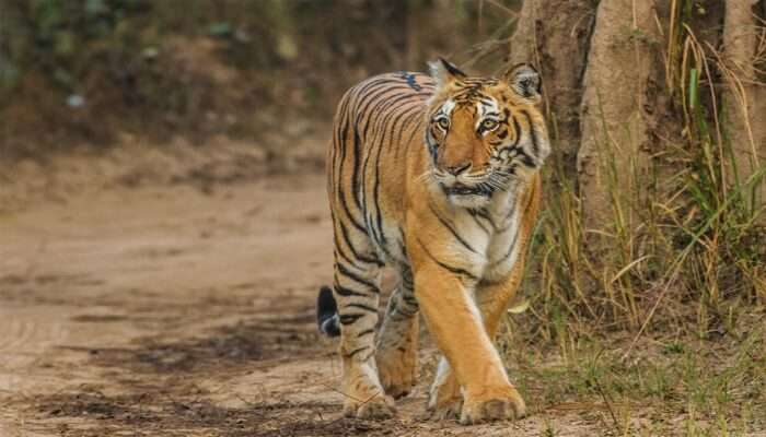 Jim Corbett National Park: Witness The Wildlife