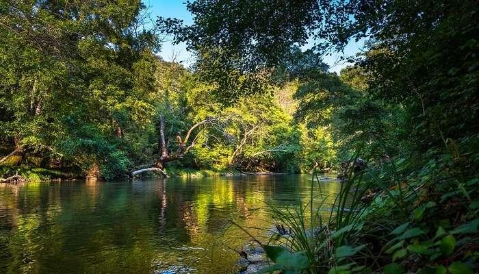 Joypur Rainforest