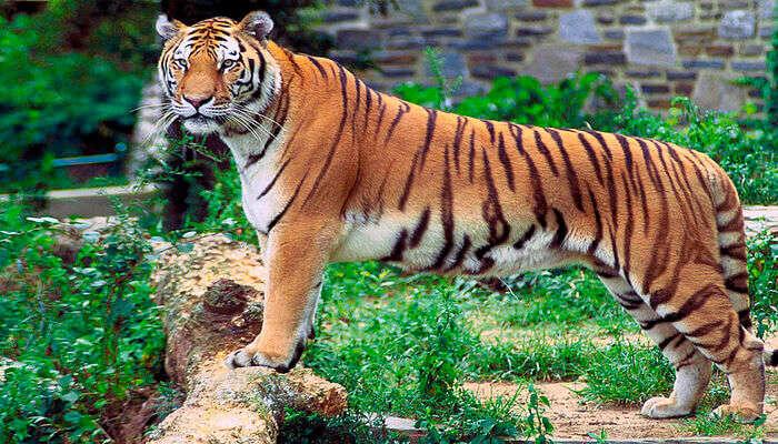 largest wildlife sanctuaries near Chennai