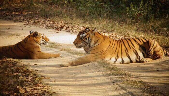 Adventurous Kanha National Park