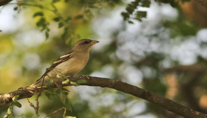Kanwar Wildlife Sanctuary