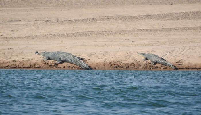 Ken Gharial Wildlife Sanctuary