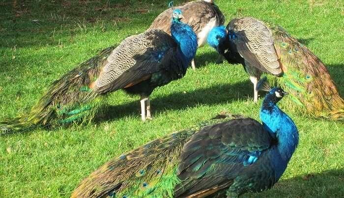 best wildlife sanctuaries in odisha