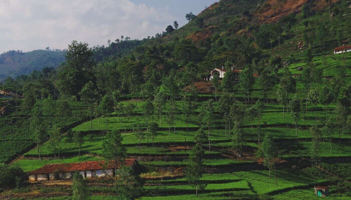 Kotagiri is a quaint hill station