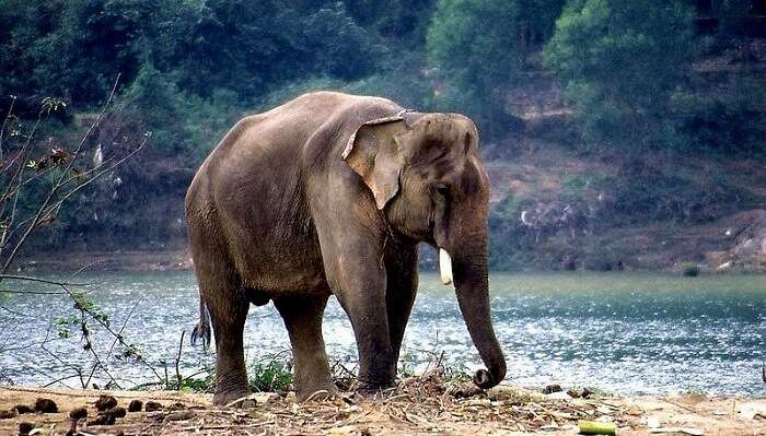 Koundinya Wildlife Sanctuary And Rayala Elephant Reserve