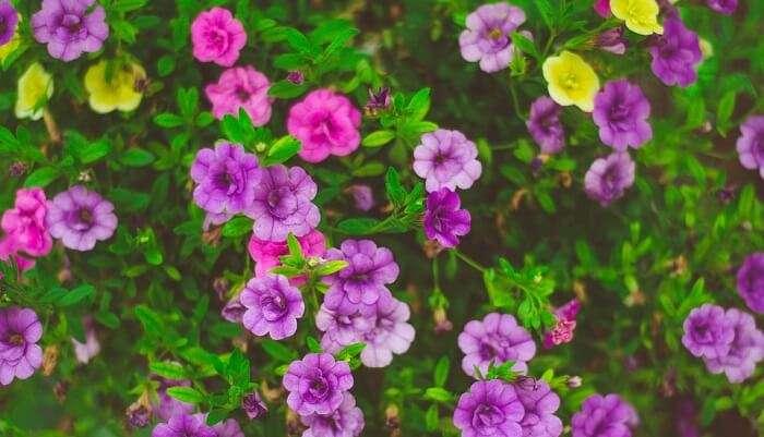 Lumbini Gardens bangalore