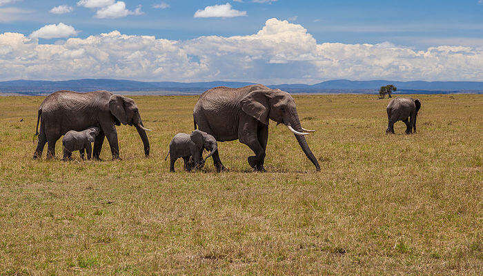 most popular reserve of wildlife
