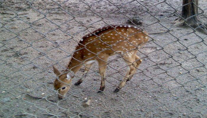 Maharajbagh Zoo