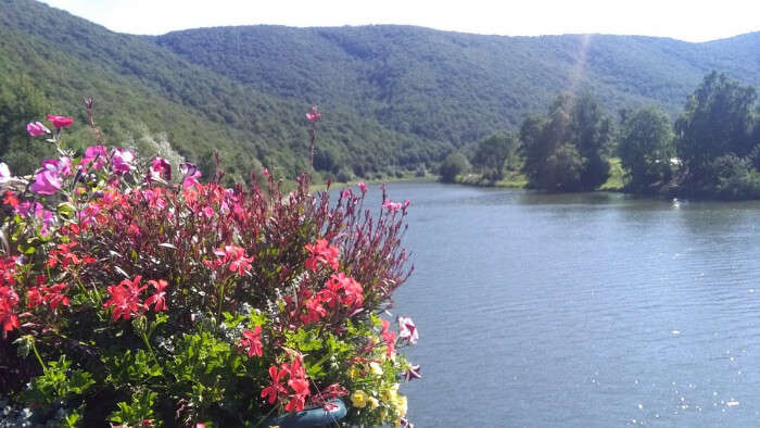 Flowers and Lake in a Valley