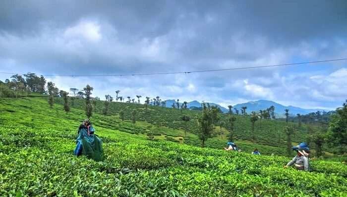 Nelliyampathi Hills