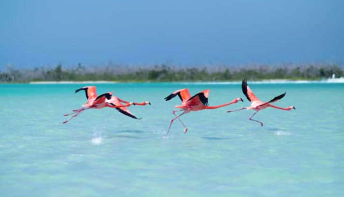 Playa Los Flamencos in Cuba