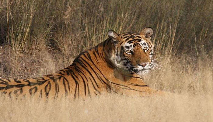 witness tigers in this national park