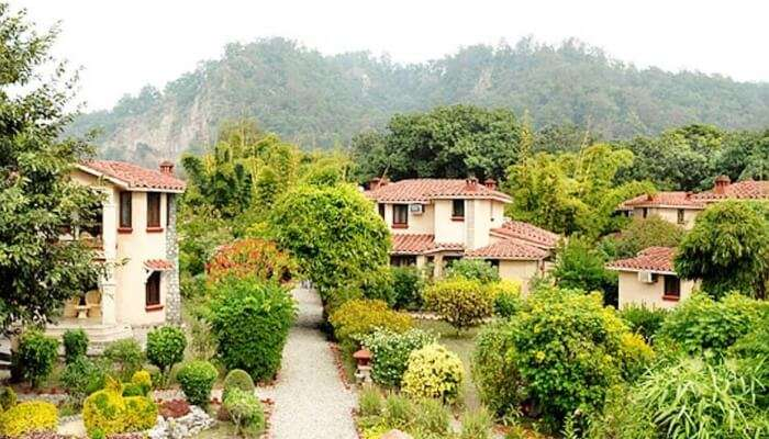 lush-green jungles of the Jim Corbett National Park