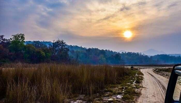 Safari_at_Rajaji_National_Park_(Haridwar) Cover