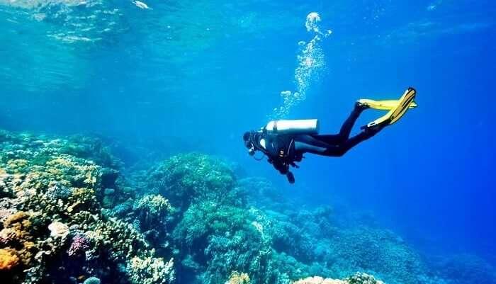 go underwater and explore the world underneath