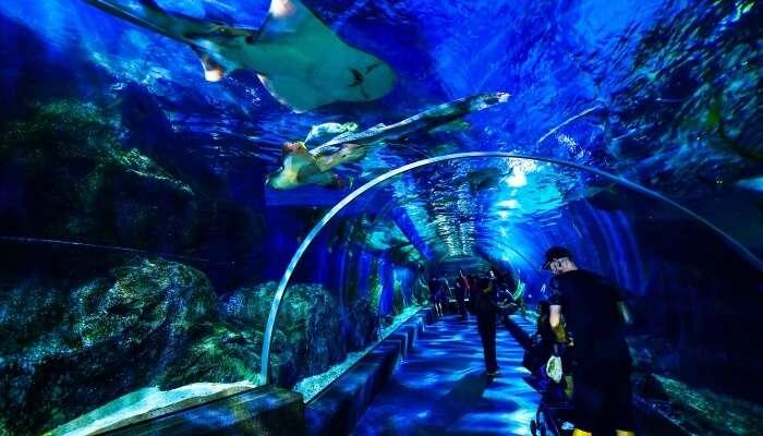Sea Life Bangkok Ocean World
