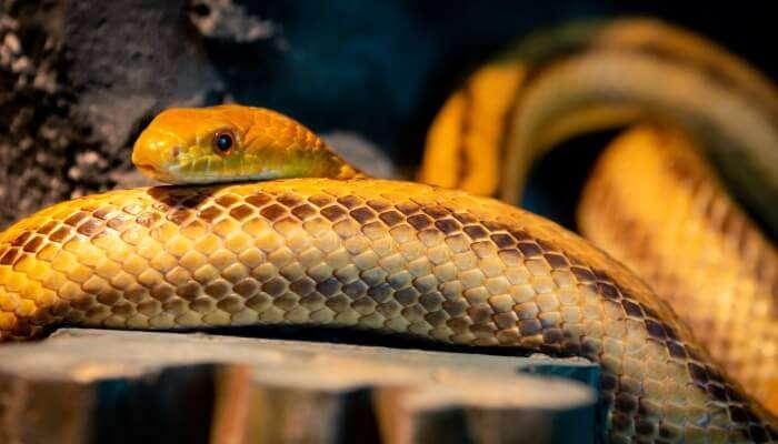 Siam Serpentarium