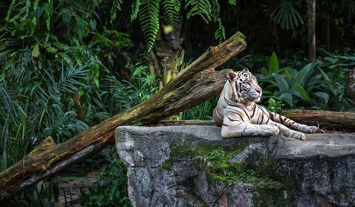 visit to singapore zoo