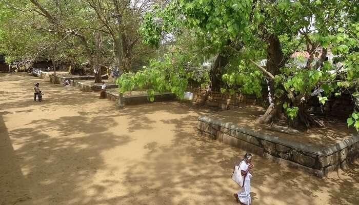 Sri Maha Bodhi sri lanka