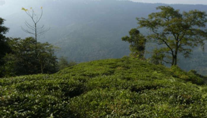 Takdah Town in Darjeeling