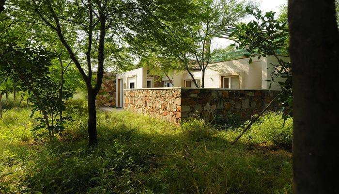 Trees and Tiger- Experience An Eco-Friendly Stay