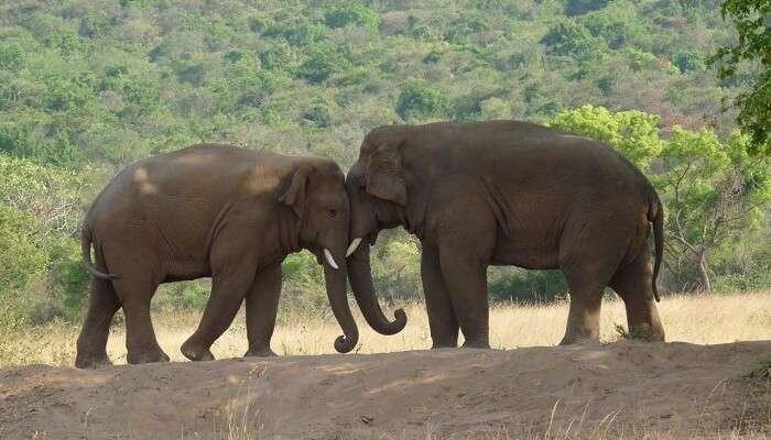 Hadagarh Wildlife Sanctuary