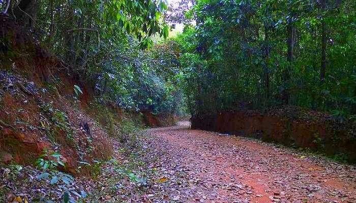 way to Unchalli Falls