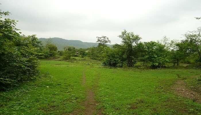 Vasind Camping