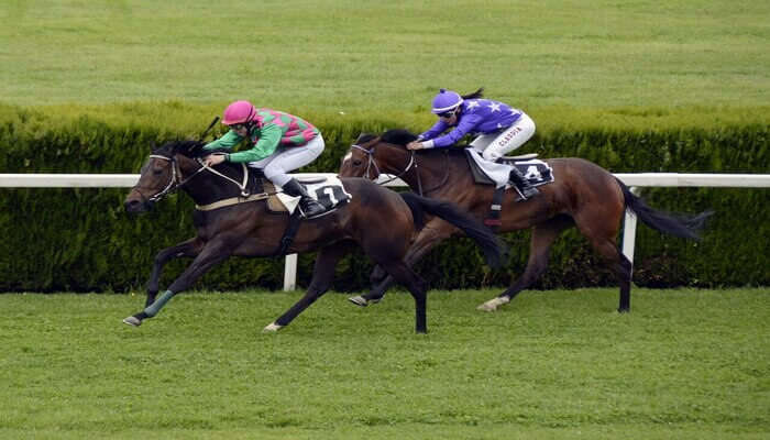 see a horse race in Hong Kong