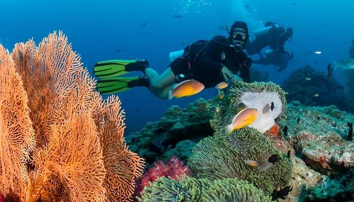 Scuba Diving In Maafushi: All You Need To Know For The Next Dive
